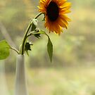 sunflower in the window by SylviaCook