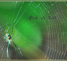 ~ Peek~A~Boo!!! ~ by WesternDreamer