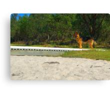 Shephard by the beach Canvas Print