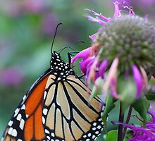 Butterfly Spots Nature Photograph by SmilinEyes