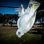 sunnie my bird majorca central victoria  by Brian Northern