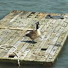 Shipwrecked by joan warburton