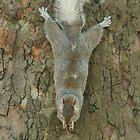 Just hanging around... by Graham Ettridge