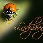 Ladybug by Kimberly Palmer