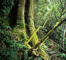 'The One Thousand Steps' Dandenong Ranges NP. by Ern Mainka