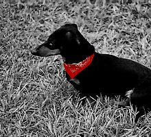 redneck doxie by rosofeke