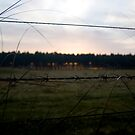 Barbed Wire Sunrise by Alex Evans