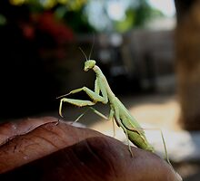 Praying Mantis by Ramon    C. Ward     Jr.