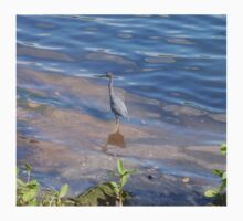Little Blue Heron T-Shirt