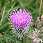 Scottish Thistle by MoonlightJo