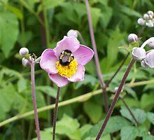 Busy Bee by Glenn Esau