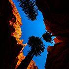 Seeking Sunlight by Shari Galiardi