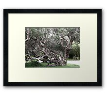 anarchy of the bush Framed Print