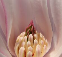 Profile of a Magnolia... by Mary Trebilco