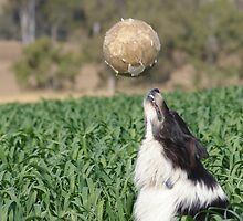 Playing Ball by Cherie Carlson
