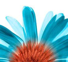 Blue Gerber by SpikeFlutie