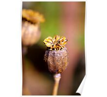 Seed Heads Poster
