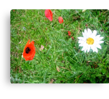 Daisy and Poppy in the Grass Canvas Print