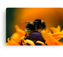 Buzz VII Canvas Print