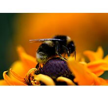 Buzz VII Photographic Print