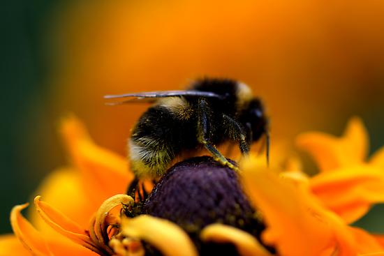 Buzz VII by Damienne Bingham