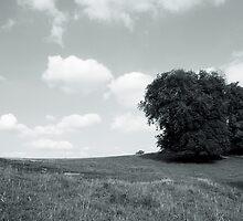 Dyrham Park - Landscape #1 by Laurie Sinnett