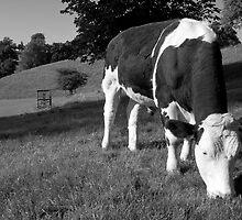 Away from the Herd by Laurie Sinnett