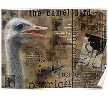 About the Ostrich Poster