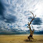 Murray River   Sth Australia by ???Sue??? Nueckel