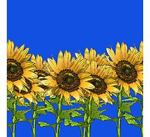 Sunflowers Blue Photographic Print