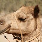 Camel on Cable Beach by seadworf