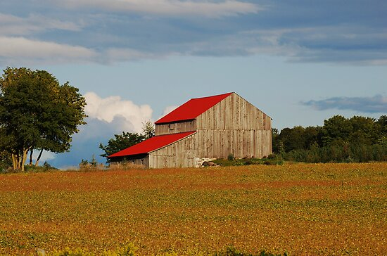 Barn Scenic by Lynda  McDonald