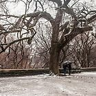 Winter in central Park by Ron Finkel