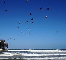 Pigeons At THe Beach by Debbie Oppermann