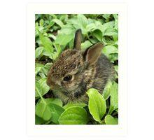 Sweet Baby Rabbit Art Print