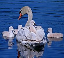 Family Outing by John Absher
