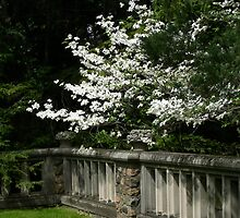 White Lilacs by Edith Graybill