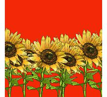 Sunflowers Red Photographic Print