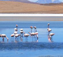 Flamingoes, Salar Laguanas by Honor Kyne