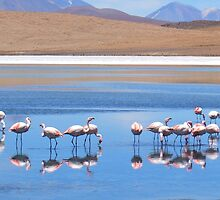 Flamingoes in the Volcanic Salar Laguanas by Honor Kyne