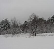 gray day by Edith Graybill