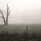 Winter Morning by Redneck
