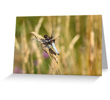 Broad-Bodied Chaser 2 Greeting Card