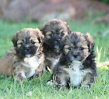 Three times cute by Ian Fraser