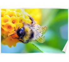 Bee-autiful Poster