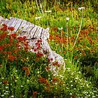 High Country Garden. by Bette Devine