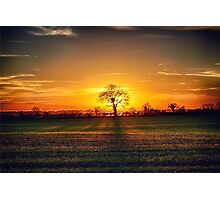 The sun and the tree Photographic Print