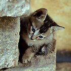 Curious kitten by aelyn