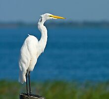 Gleaming White by Phillip  Simmons