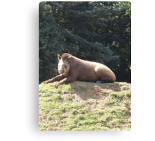 Tapir To The Top and Smile Canvas Print